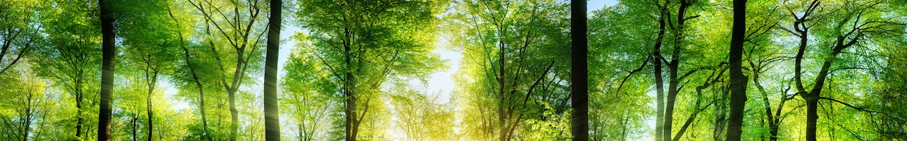 Home_Wald_Banner